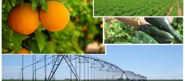 Exporta BCS más de 16,000 toneladas de diversos cultivos