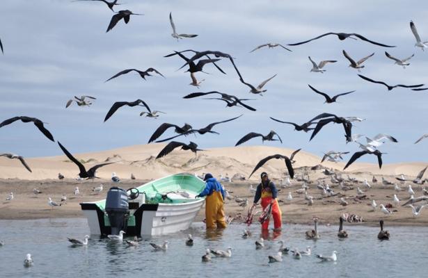 Incrementa 33% captura de sardina en Pto. San Carlos