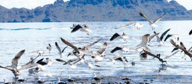 Piden que cumplan las disposiciones legales para disfrutar de las playas en Loreto