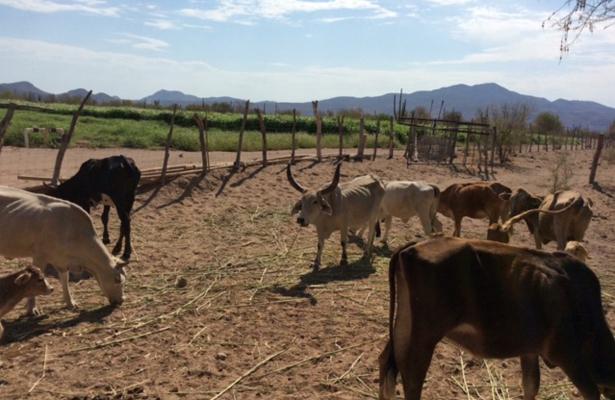 Van PGJE y ganaderos al combate del abigeato