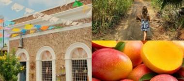 Ya viene el Festival del Mango en Todos Santos