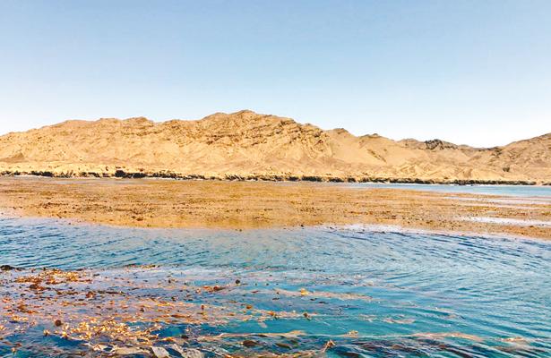 Abundancia de sargazo en la Pacífico-Norte  beneficiará a especies marinas como el abulón