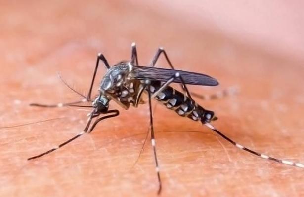 Inicia campaña contra el dengue, zika y chikungunya