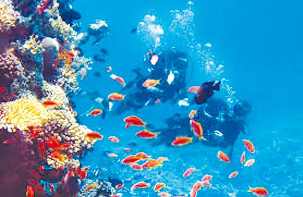 Promueven viajes turísticos desde Los Cabos a islas Revillagigedo