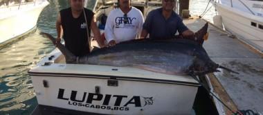 Preocupa inseguridad a Fundación para la Conservación de Peces Picudos