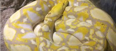 [Galería] Celebra El Serpentario 17 años de existencia