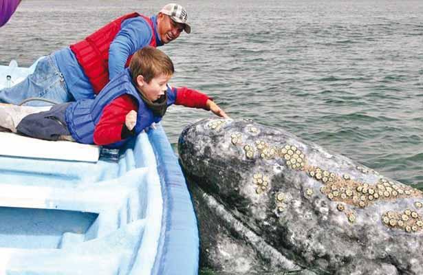 Llegan las ballenas a lagunas Ojo de Liebre y San Ignacio