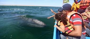 """""""Entre uno y otro asomo de los cetáceos, las horas avanzan"""""""