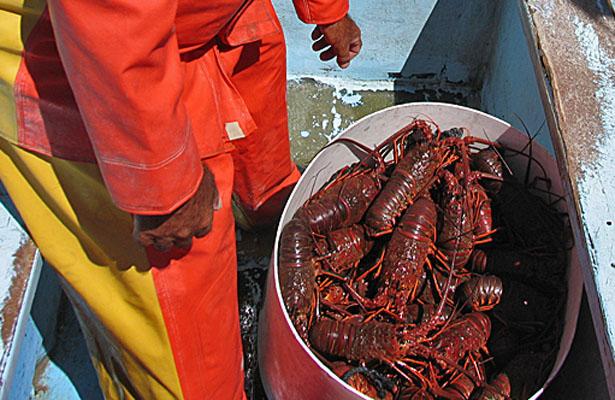 Resultado de imagen para logo de la Federación de Cooperativas Pesqueras de Baja California, Francisco Javier Rouseaud.
