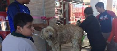 Vacunan y bañan perros en estación de bomberos