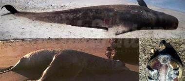 Reportan muerte de animales marinos en Parque Bahía de Loreto