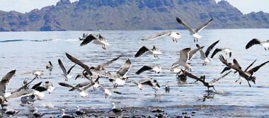En Loreto invitan al avistamiento de aves