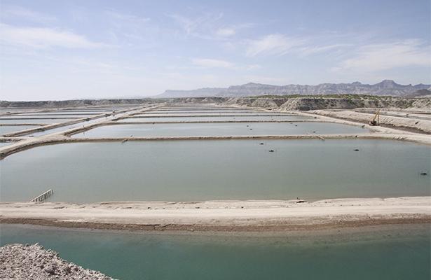 Industria acuícula, de gran importancia para Baja California Sur