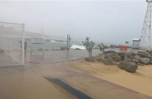 Cabo tormenta bud