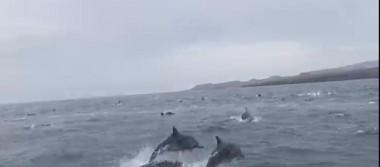 Grupo de turistas son sorprendidos por delfines