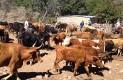 Temen que decreto de áreas protegidas afecte actividades productivas