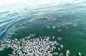 barco sardinero Biósfera de Vizcaíno
