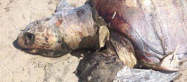 Primero vaquitas marinas, después manatíes, ahora mueren 122 tortugas en Chiapas