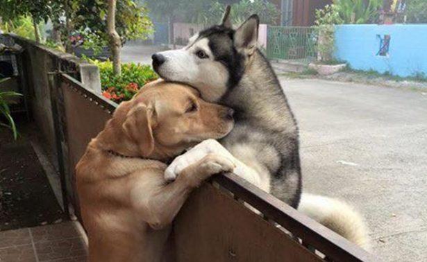 Perrito se escapa de su casa para visitar a su mejor amigo