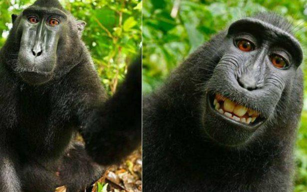 ¡Histórico! Termina batalla legal entre fotógrafo y un macaco por selfie