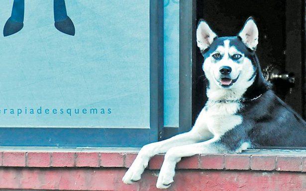 ¿Tu perro se perdió? No te preocupes, así rastrearán perros extraviados en la CDMX