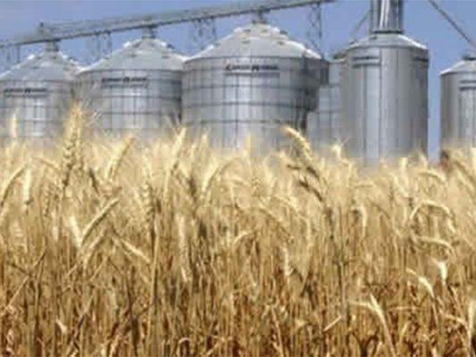 Destinan 24 mil toneladas de trigo para producción harinera