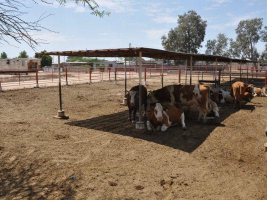 Deben salir todos los corrales de ganado de la mancha urbana
