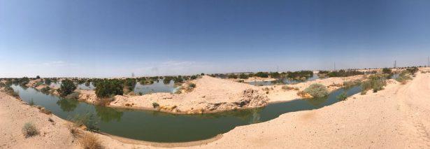 Emprende OOMAPAS y Pronatura 25 hectáreas para humedal