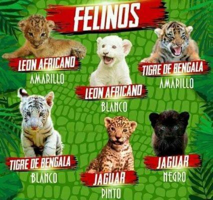 Animales exóticos en venta en veterinarias y por internet en San Luis