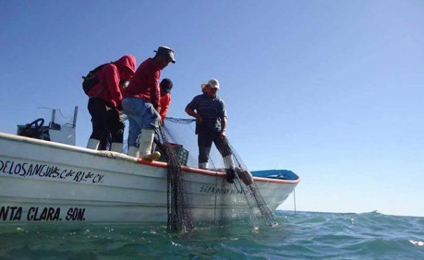 Pescadores del Golfo de Santa Clara dispuestos a experimentar