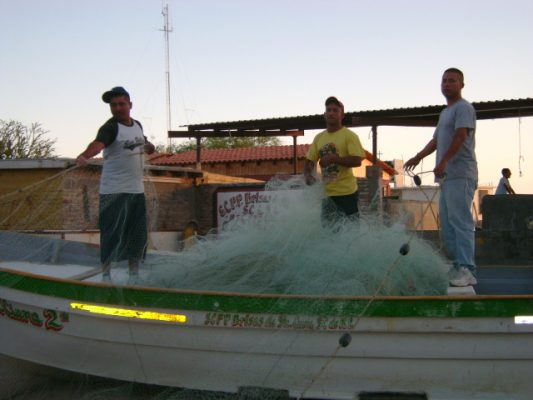Se definió la cuota de para pescar curvina en el Golfo