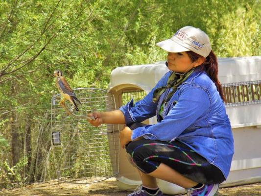 En festival mostrarán trabajos de restauración del delta del Río Colorado