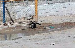 Perros callejeros buscan refrescarse por las altas temperaturas