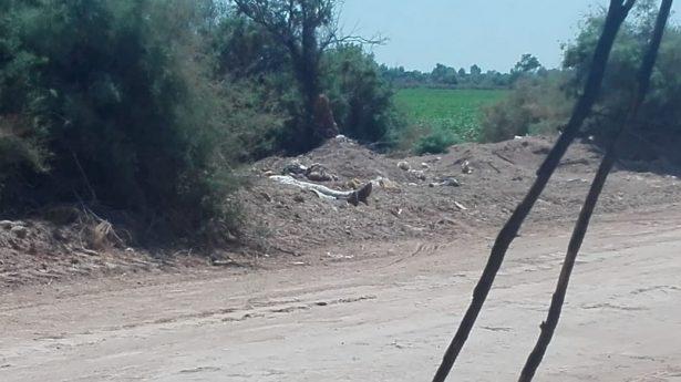 Arrojan cadáver de mujer en fraccionamiento en Mexicali BC