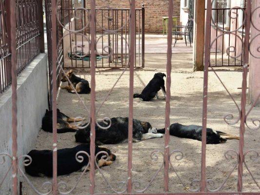 "Atiende ""Patrulla Canina"" 75 casos de maltrato a animales"