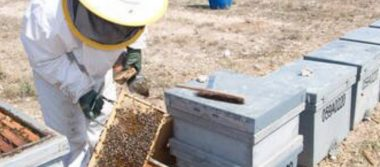 Se produce  miel de calidad en San Luis
