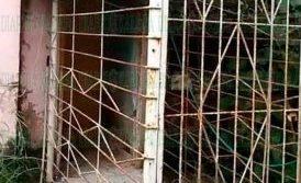 La tenían enjaulada en el patio de una casa: rescatan a mujer en Veracruz